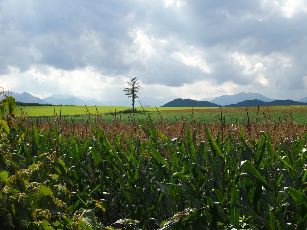 9月の中札内村・・「実りの秋の農村風景」_f0276498_23314964.jpg