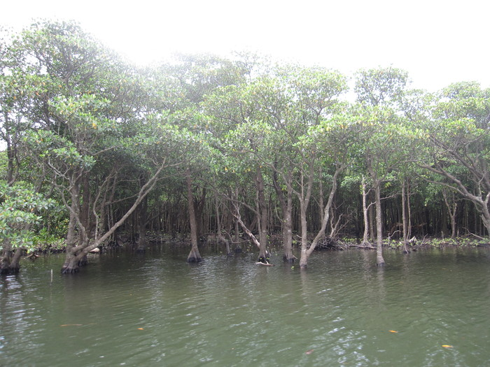 西表ジャングル縦断記録_e0155231_22533121.jpg