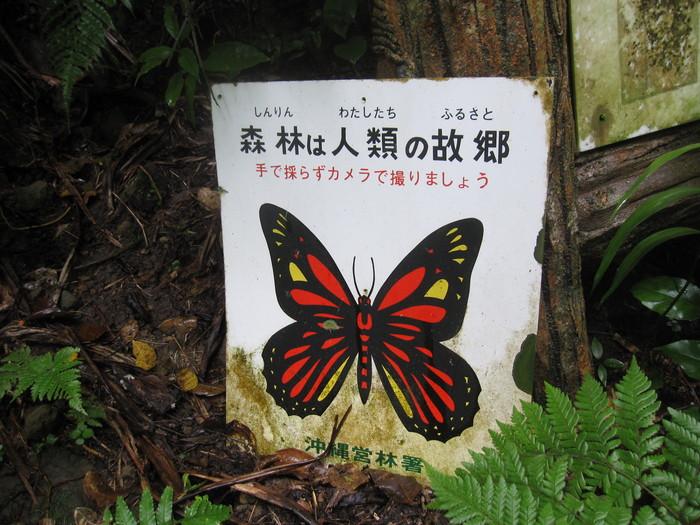 西表ジャングル縦断記録_e0155231_22543611.jpg