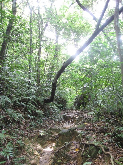 西表ジャングル縦断記録_e0155231_2254768.jpg