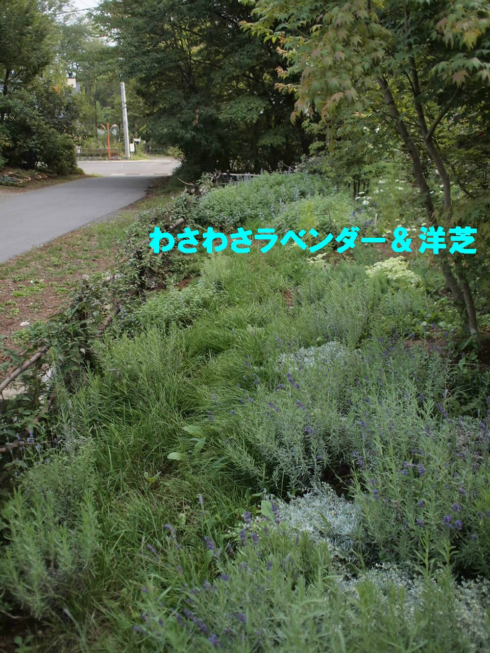 a0299945_193648.jpg