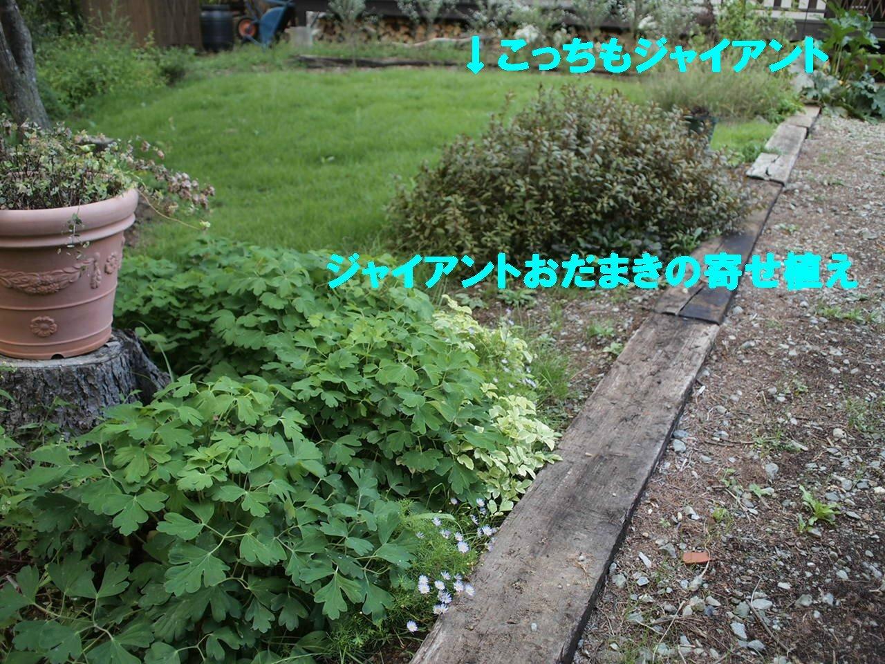 a0299945_1942183.jpg