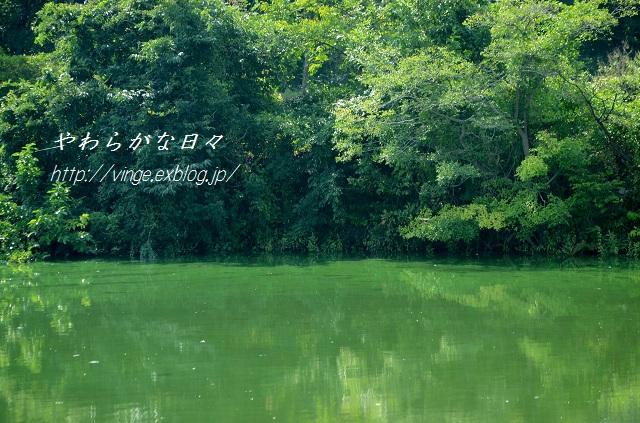 アオコ大発生_a0158478_9582250.jpg