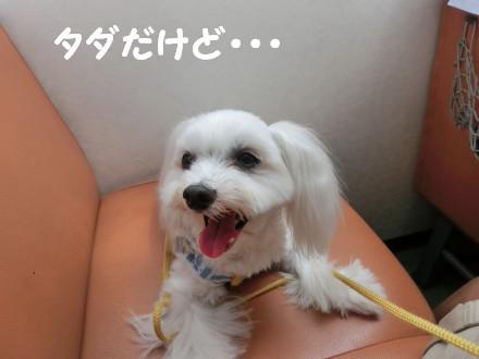b0193480_1947243.jpg