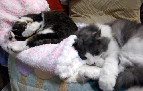 Huu&チョビ 秋の花粉症は猫と遊んで過ぎるのを待つ♪_a0136293_1854789.jpg