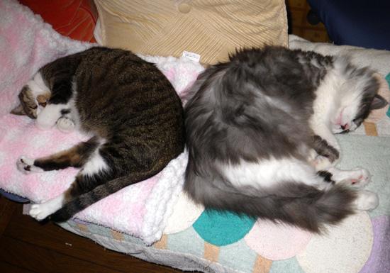 Huu&チョビ 秋の花粉症は猫と遊んで過ぎるのを待つ♪_a0136293_1863680.jpg