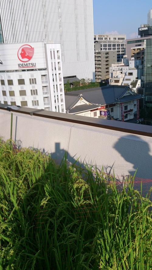 東京の話題をば・・・_e0188729_11254023.jpg