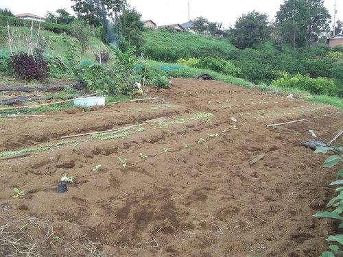 夏の草原から~秋の野菜畑に!_b0137932_18102885.jpg