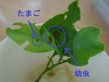 e0269946_20305362.jpg