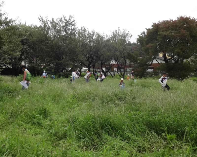 津田で昆虫教室_f0059673_23453749.jpg