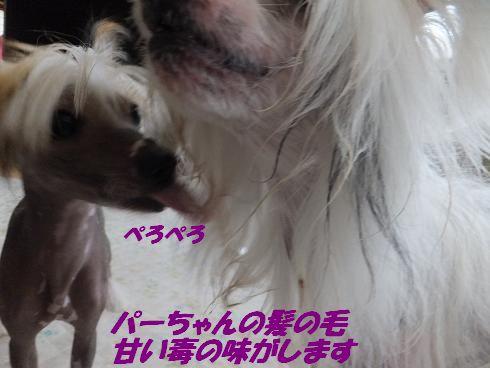 f0179203_1731871.jpg