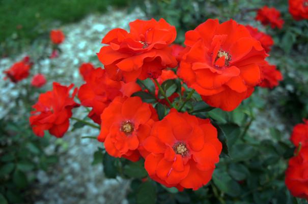 秋の赤花_f0160407_4461958.jpg