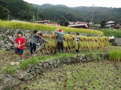 稲刈りを行いました。_b0131012_17574339.jpg