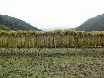 稲刈りを行いました。_b0131012_1758813.jpg