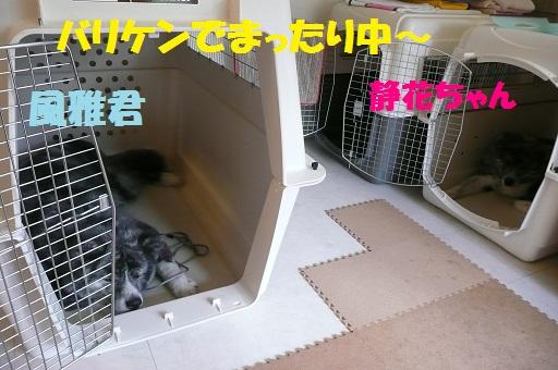 f0121712_1731531.jpg