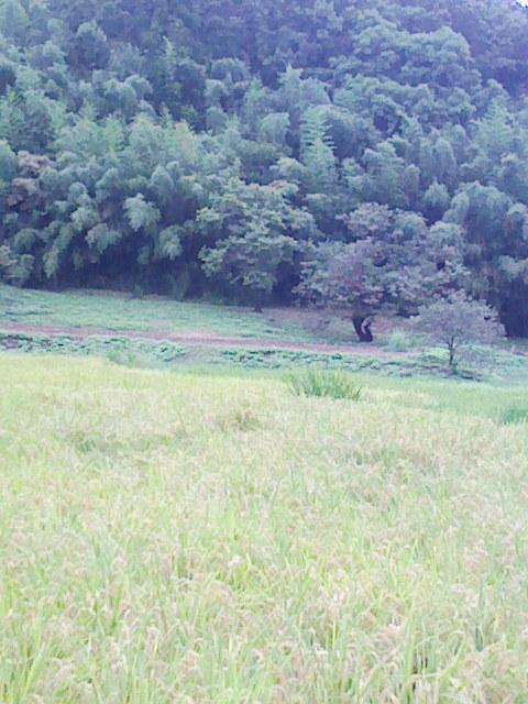 b0031140_2046833.jpg