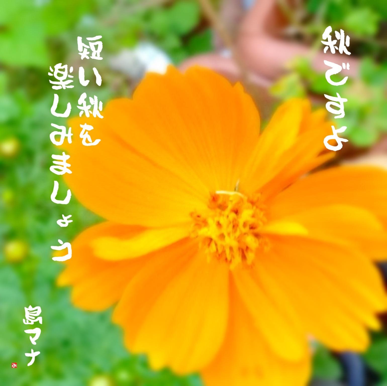 f0183846_6243112.jpg