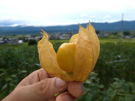 2013年9月『奥信州 幻のキノコ旅』【2】_e0071652_2049306.jpg
