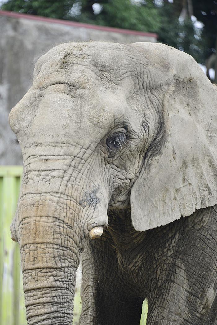 2013.9.7 東武動物公園☆象のあいちゃんときょうこちゃん【Elephant】_f0250322_131086.jpg