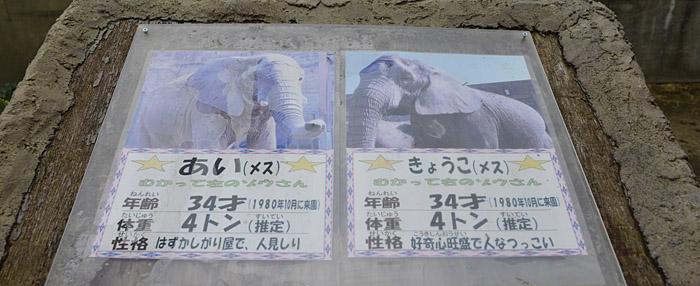 2013.9.7 東武動物公園☆象のあいちゃんときょうこちゃん【Elephant】_f0250322_131149.jpg