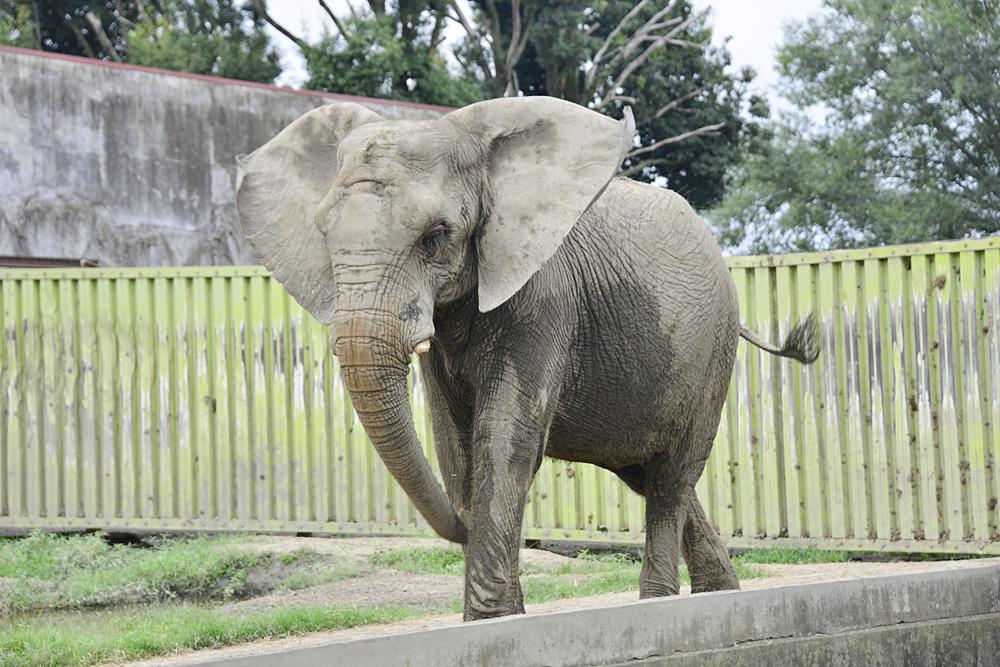 2013.9.7 東武動物公園☆象のあいちゃんときょうこちゃん【Elephant】_f0250322_131191.jpg