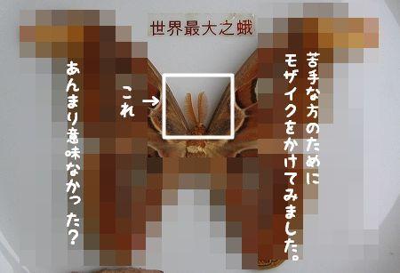 d0179828_2044362.jpg