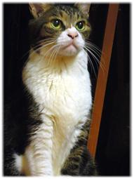 化け猫変化_d0221430_15154178.jpg