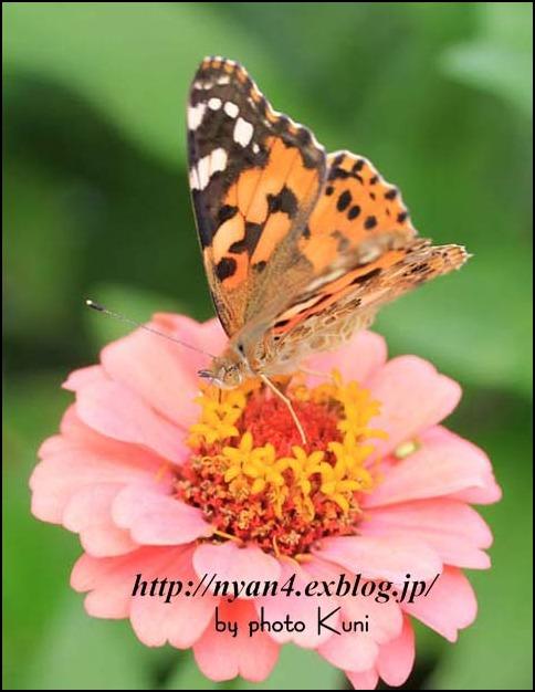 バタフライガーデン_f0166234_1592092.jpg