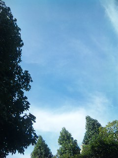 blog:台風一過_a0103940_12521498.jpg