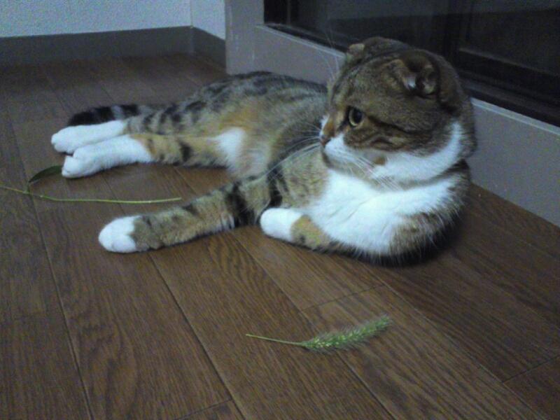 ヒトを顎で使うネコ : 折れ耳猫...