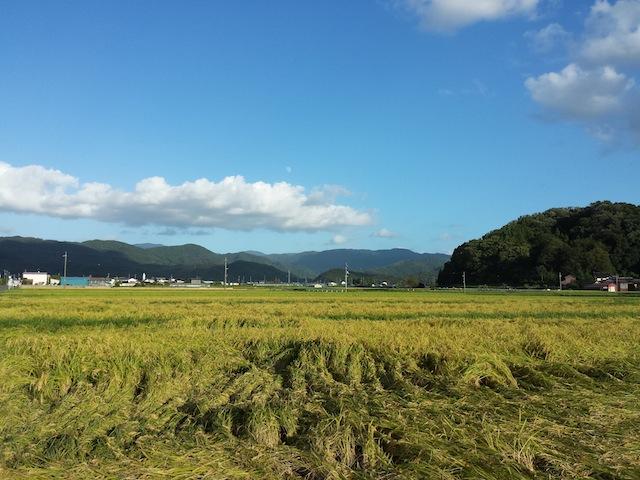 稲刈り_f0192307_5275735.jpg