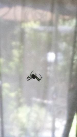 蜘蛛からのメッセージ_d0085018_2224186.jpg