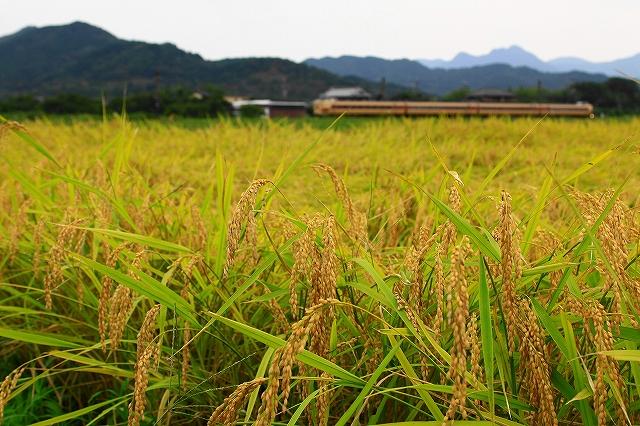 2013年9月 刈り入れ終わる福知山線_f0233120_2212136.jpg
