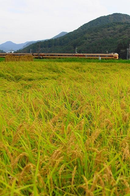 2013年9月 刈り入れ終わる福知山線_f0233120_22293945.jpg