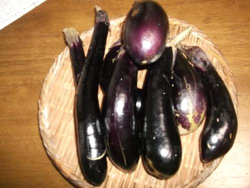 夏野菜いまだに健在!_b0137932_14485570.jpg
