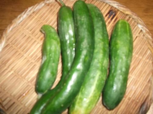 夏野菜いまだに健在!_b0137932_1449521.jpg