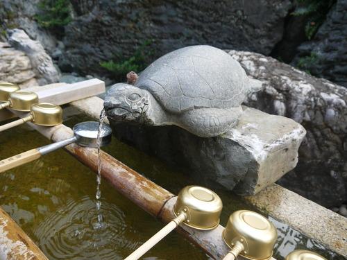 足摺岬にゃんこ & 金剛福寺 & 皿鉢料理_e0133535_1341865.jpg