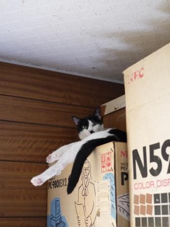 猫のお友だち ハナちゃんホビちゃんエムくんダイヤちゃんスペードちゃん編。_a0143140_2322821.jpg