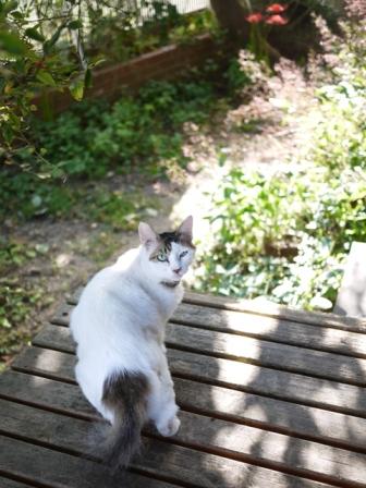 猫のお友だち ハナちゃんホビちゃんエムくんダイヤちゃんスペードちゃん編。_a0143140_23251125.jpg