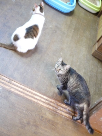 猫のお友だち ハナちゃんホビちゃんエムくんダイヤちゃんスペードちゃん編。_a0143140_23264627.jpg