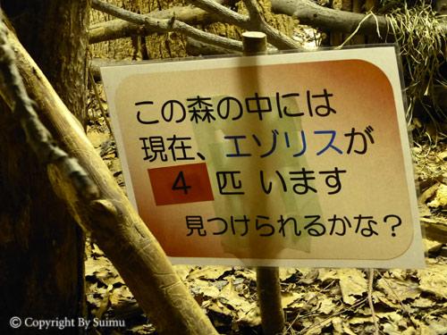 ドサンコの森は独り立ち?_d0154140_9205645.jpg