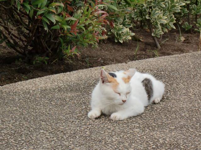 三毛猫ちゃん_a0257652_22311472.jpg