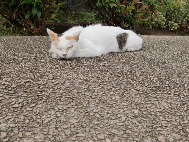 三毛猫ちゃん_a0257652_22312911.jpg