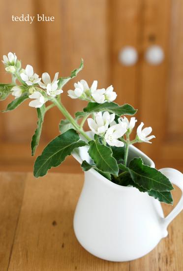 white pitchers  白いピッチャーたち_e0253364_10335895.jpg