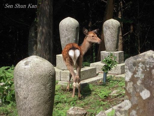 比叡山(瑠璃堂・黒谷青龍寺)_a0164068_11723100.jpg