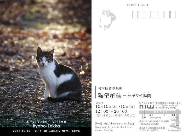 岡本佳音写真展「猫望絶佳-かがやく瞬間(とき)-」_a0115684_22533789.jpg