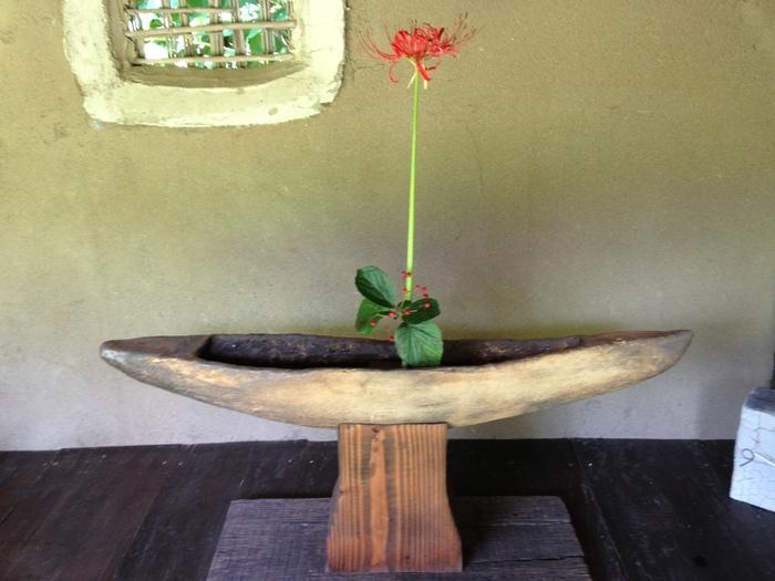 今の花と日の出_b0254098_22273073.jpg