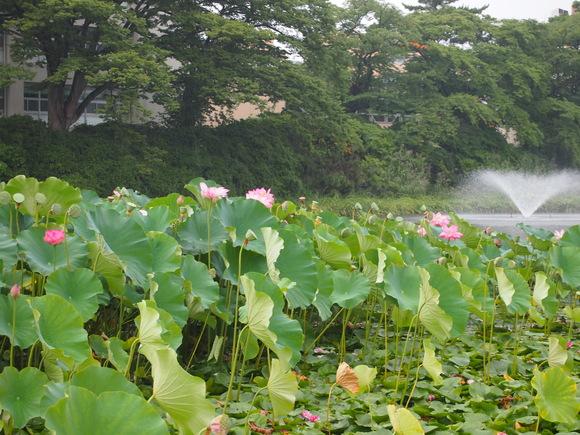古代の蓮と彌高神社_c0125702_19445099.jpg