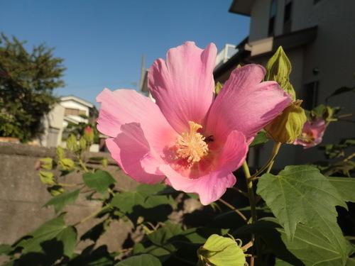 「仁べ」の庭の秋   by   「仁べ」_e0228405_18402497.jpg