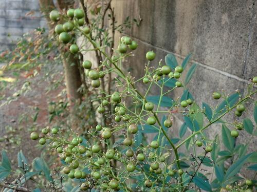 「仁べ」の庭の秋   by   「仁べ」_e0228405_19452686.jpg